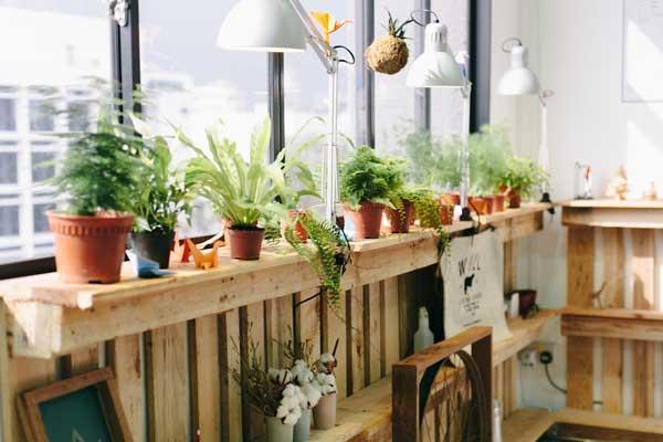 秋风萧瑟 用绿植营造一室的盎然生机