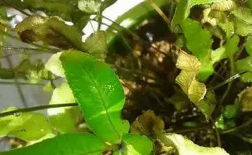 养花过程中20个最常见的花卉疾病问答