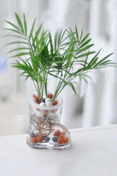 秋季室内最好养的6种盆栽植物