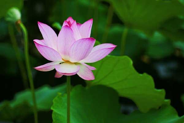 中国古代十大经典鲜花食谱