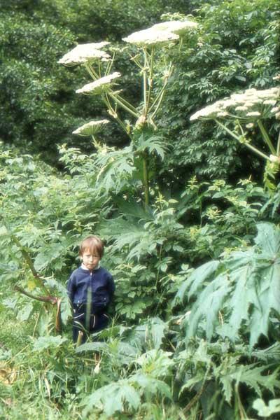 路边的野草不要乱摸 那些不好惹的植物