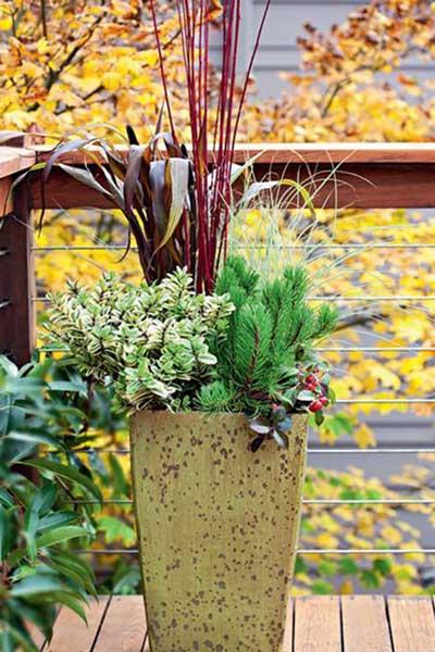 秋季观叶植物组合盆栽建议及几种组合方式