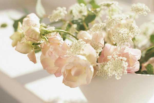 花卉的保鲜过程及花卉保鲜应注意的问题
