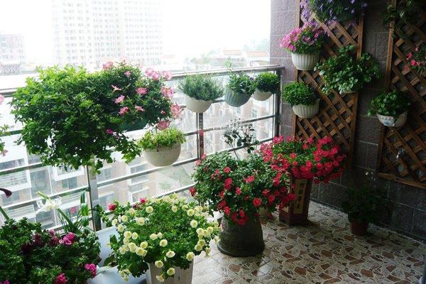 精心利用有限空间 家庭养花布局的四个技巧