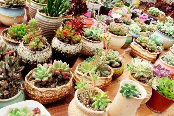 立冬后不同花卉的越冬养护注意事项