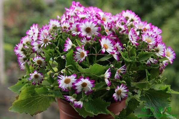 为家选对植物 过一个五彩斑斓的冬天