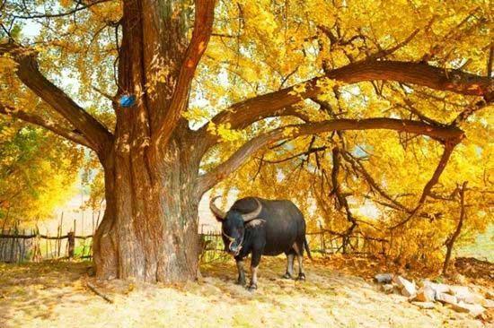 11月国内最美景色 色彩斑斓的调色板