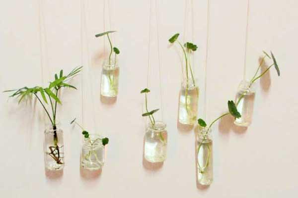 寒冷冬季 如何养出浓绿鲜亮的水培植物