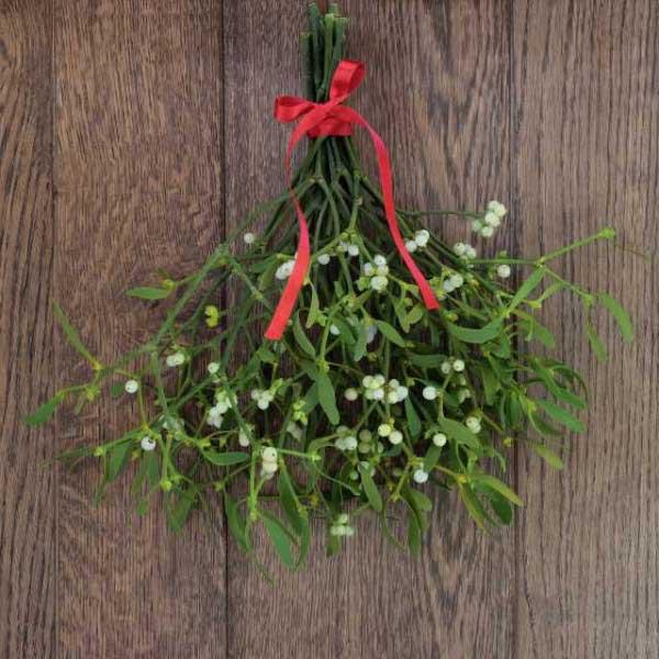 圣诞节传统的花草植物