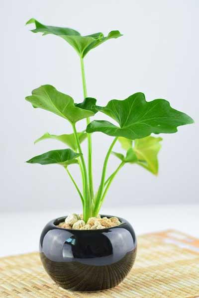 不同种类植物的冬季养护要点和注意事项
