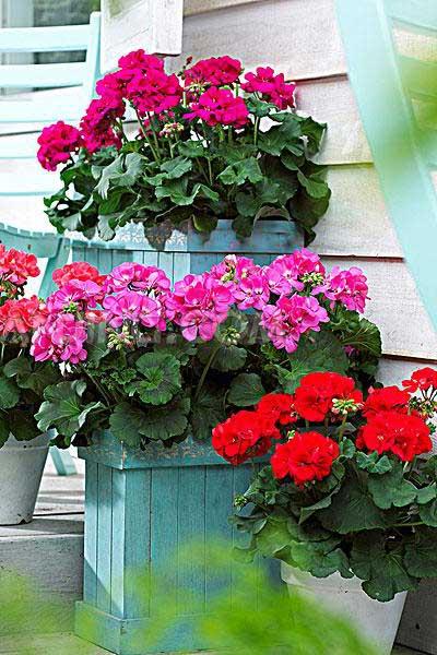 百花凋零时节 那些到了最佳欣赏季节的花卉