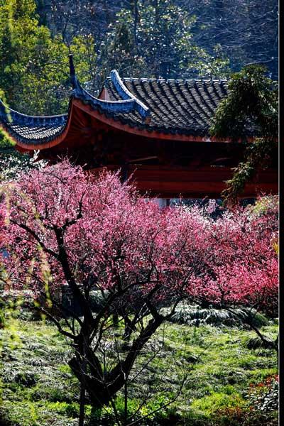 杭州冬日赏梅地图 寻觅这座城骨子里的美