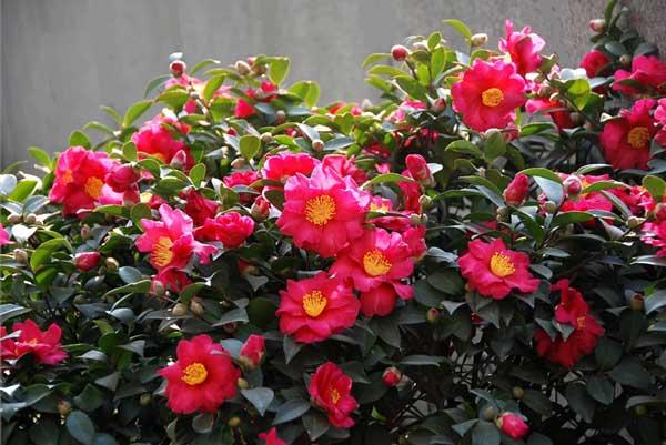 让花卉安全度过冬天 冬季养花有诀窍
