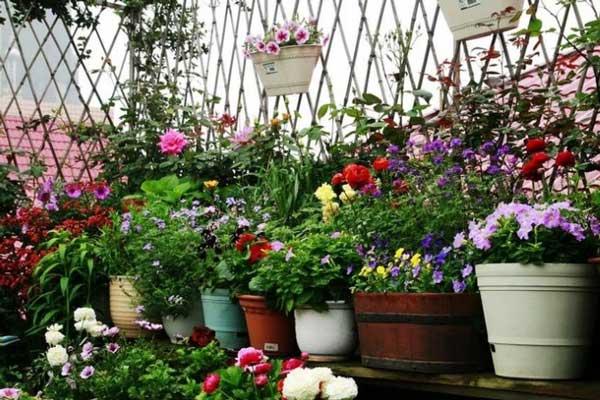 冬季养花的三个诀窍及达人经验建议