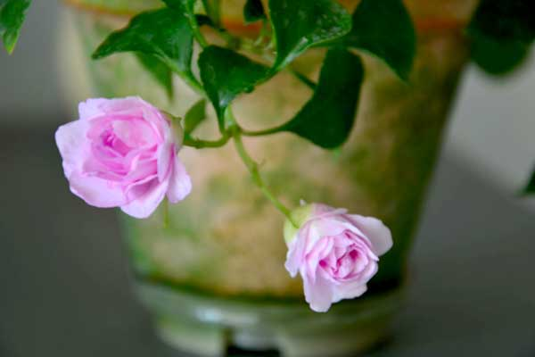 养花十二月口诀 养花不再是难事