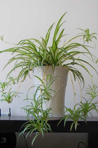 绿植加方位打造家居好风水 不同空间绿植推荐