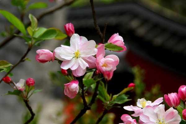 养花指南:春季养花口诀