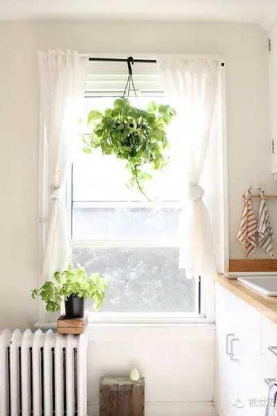 如何用一盆绿萝让房子充满生机