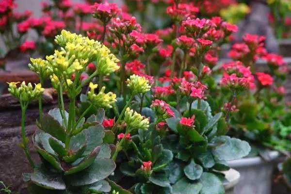 老祖宗的智慧 28条关于养花的谚语