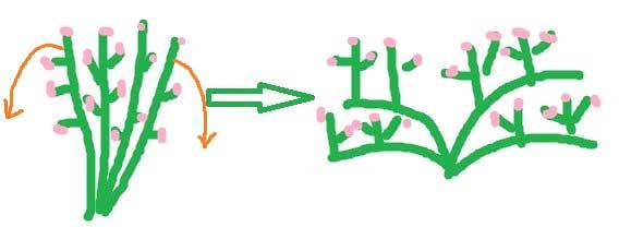 手绘图解花卉修剪方法 真的是一看就会