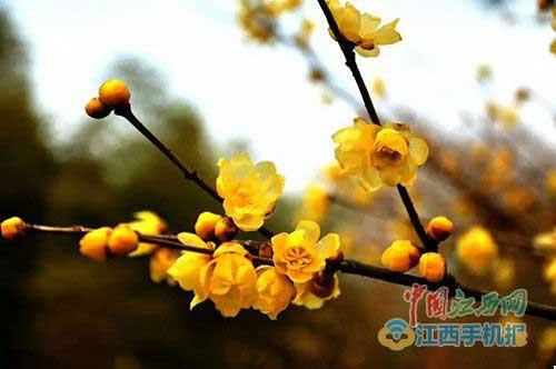 梅岭一年四季都有花 赏花攻略大全