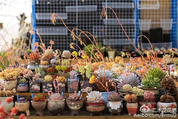 多肉植物们春天的故事(浇水、叶插、开花)