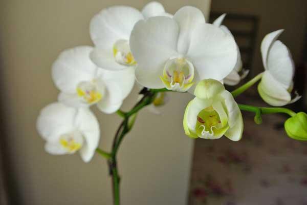 适合夏季的花卉植物推荐及其养护要点