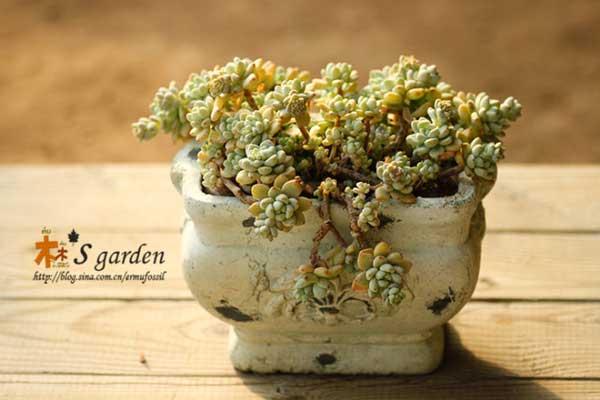 多肉植物春季养护建议(几个切忌)