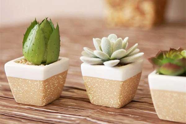 实用!植物不同生长阶段的养护方法