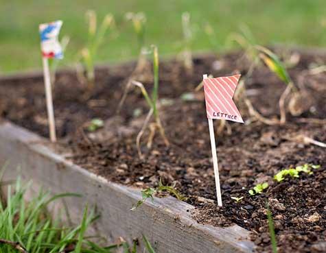 【创意】为你的花园增添灵气的植物标签