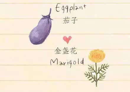 利用植物的相克巧妙防治花卉病虫害