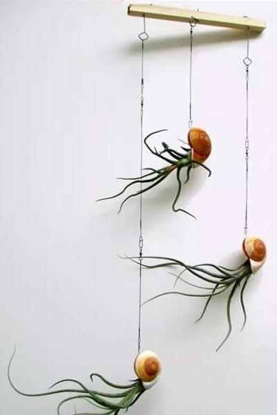 颜值高又不用土的植物 可以排在懒人植物榜首了