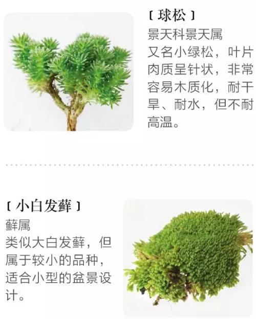 多肉植物组盆的原则及几种妙趣组盆方式